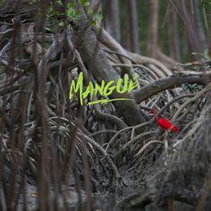 As florestas de mangue possuem árvores de grande porte, são recortadas por rios e canais de águas escuras e tranquilas, são o refúgio de diversas espécies de crustáceos, peixes, moluscos e aves marinhas. Os mangues amazônicos, porém, ainda são desconhecidos pela maioria dos brasileiros e ainda os esperam aqui com muita beleza!  Foto: João Ramid #montereylocals #salinaslocals- posted by Redestur https://www.instagram.com/salinopolisoficial - See more of Salinas, CA at http://salinaslocals.com