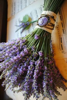 Explore amazing art and photography and share your own visual inspiration! Lavender Decor, Lavender Cottage, French Lavender, Lavender Blue, Lavender Fields, Lavender Flowers, Flowers Nature, Purple Flowers, Beautiful Flowers