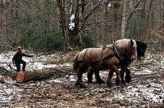 percheron débardage - Recherche Google Horses, Google, Animals, Horse, Animaux, Animales, Animal, Dieren