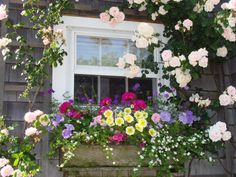 Flower Box wrapped by climbing roses