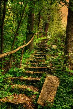 Forest Path nearly overgrown with plants and made of natural looking steps and railing. Makes for a peaceful stroll through the woods