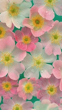 Flower iPhone 6 Wallpapers 242