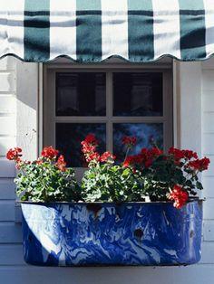 patriotic garden blooms
