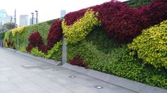 Ideas Terraza, Vertikal Garden, Large Backyard Landscaping, Green Facade, Vertical Garden Design, Minimalist Garden, Walled Garden, Garden Structures, Plant Wall