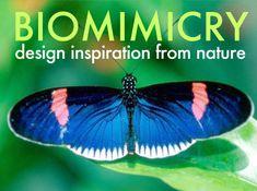 biomimicry - Buscar con Google