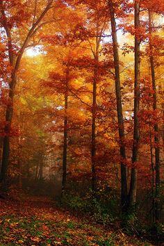 Otoño con sus hojas multicolores