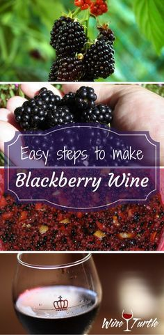 Homemade Blackberry Wine in 4 Easy Steps! Check out these easy steps on how to make delicious Blackberry Wine!Check out these easy steps on how to make delicious Blackberry Wine! Homemade Blackberry Wine Recipe, Homemade Wine Recipes, Homemade Alcohol, Homemade Liquor, Blackberry Recipes, Canning Recipes, Wine And Liquor, Wine And Beer, Wine Drinks