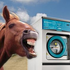 Equestrian Le Yards Recommended That Turn Out Horse Rugs Are Washed At Least 4 Times A Year In Commercial Rug Washing Machine