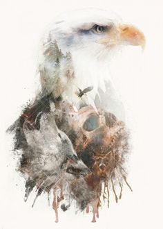 surreal animals eagle bald eagle america nature skull painting wolf owl deer forest double exposure Animals