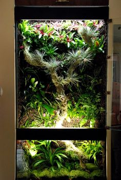 rainforest tank with two lights sources