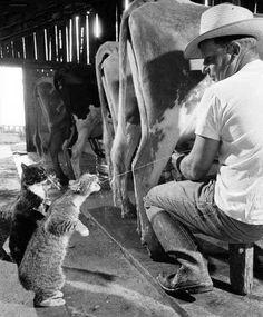 Fresh milk.