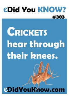 Crickets hear through their knees. http://edidyouknow.com/did-you-know-383/