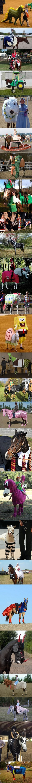 Costumed horses