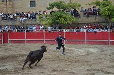 Santacara: Vacas de Santos Zapatería (5) Plaza, Goats, Animals, Saints, Cows, September, Animales, Animaux, Animal