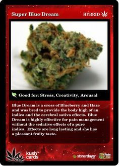 Blue Dream is a cross of Blueberry and Haze and was bred to provide the body high of an indica and the cerebral sativa Cannabis News, Medical Cannabis, Cannabis Oil, Buy Cannabis Online, Buy Weed Online, Weed Card, Weed Strains, Marijuana Plants, Cannabis Growing