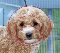 round face shape with marks (2)