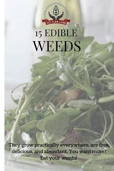 15 edible weeds