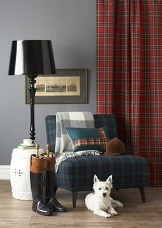 What a great masculine setting! The grey flannel colored walls, the tartan draperies, the accessories- even the dog fits!.