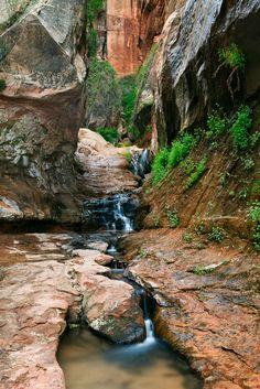 Canaan Mountain Wilderness, Utah | Michael Greene