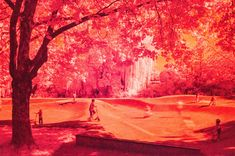 red sunday #kurparkoberlaa #vienna #wien #infrared #infrarot #red #rot #summe #sommer Vienna, Sunday, Red, Pictures, Painting, Photos, Domingo, Painting Art, Paintings