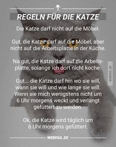 Regeln für die Katze Rules for the cat Webfail – Fail Images and Fail Videos Funny Animal Memes, Funny Animals, Funny Quotes, Epic Fail Pictures, Funny Pictures, I Love Cats, Cute Cats, Tierischer Humor, Gatos Cats