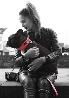 Pjay`s Streetstyle Adele  #pjays#dog#iggy#greyhound#cute#cutedog#dogcollar#frenchbulldog#streetstyle#dog
