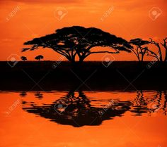 pinterest african sundawn photos - Google Search