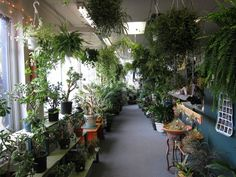 plant lust. I need some green in my life, but my cat would devour all of this.