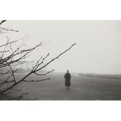 Harry Callahan, Eleanor (Trees in Foreground), 1950s-1960s