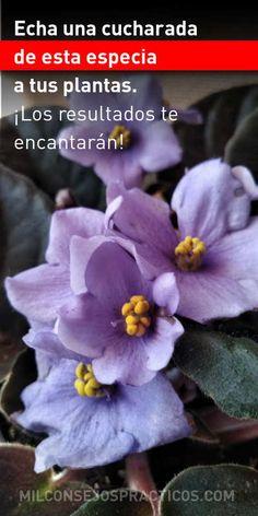 Echa una cucharada de esta especia a tus plantas. ¡Los resultados te encantarán! Agaves, Herb Garden, Compost, Flower Arrangements, Cactus, Herbs, Nature, Flowers, Manta Crochet