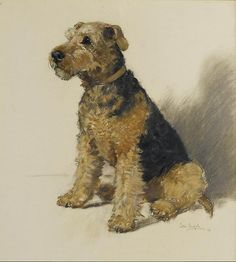 Welsh Terrier (pastel) by Peter Biegel, British artist, 1913-1988