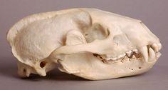 Skull study | Etsy