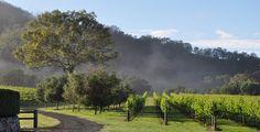 Sarabah Estate Vineyard - Vineyard Wedding Gold Coast $1500