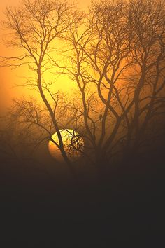 wavemotions:  Watcher in the Fog by Mikeal Dixon