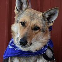 Pictures of Henrietta a German Shepherd Dog for adoption in Tinley Park, IL who needs a loving home. Tinley Park Illinois, Australian Cattle Dog, German Shepherd Dogs, Rescue Dogs, Pet Adoption, Safari, Husky, Corgi, Meet