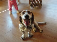 silverito my happy Dog :D