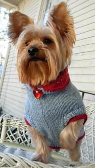 1000+ images about Dogs - Yorkie sweaters and outfits on ...