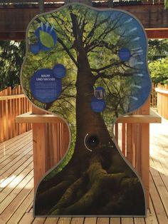 Interaktives Exponat / Hands-On zum Thema Wassertransport im Baum. Baumkronenpfad Bayerischer Wald in neuschönau. Konzipiert und realisiert von Impuls-Design.