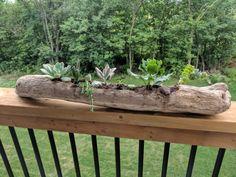 Nestojí to ani cent: 31 geniálnych nápadov, ako si vylepšiť záhradu pomocou odpadového dreva a konárov! Faux Succulents, Succulents Garden, Succulent Wreath, Garden Images, Images Google, Little Plants, Rest Of The World, Driftwood, Fence