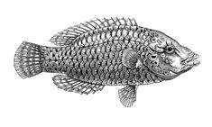 Sea creatures on Behance Ink Art, Sea Creatures, Turtle Sketch, Ink Pen Drawings, Lion Sculpture, Illustration Art, Creature Drawings, Sea Illustration, Ink Drawing
