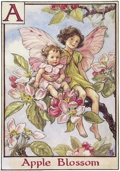 The image of the Apple Blossom Flower Fairy above is one of Cicely Mary Barker's Flower Fairies. First published in A Flower Fairy Alphabet, London, Blackie, 1934.