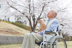 More Seniors are bringing their pets with them to assisted living homes, and we think it's a WONDERFUL thing! Read the full story here: http://www.vet-organics.com/pets-provide-big-benefits-senior-homes/