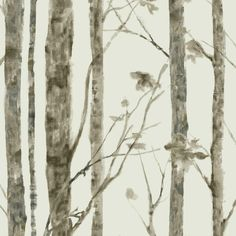 Trees Peel and Stick Wallpaper - Roll / Brown