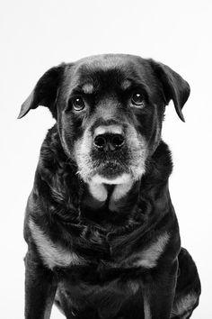// DOG PORTRAITS // by Marko Savic, via Behance
