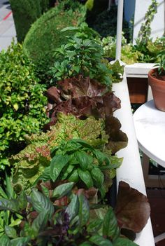 Growing Vegetables in Containers, Organic Container Gardening