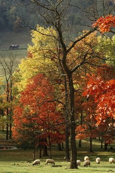 Autumn Awe in West Virgina ~ Willard Benner wybenner