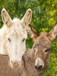 Ruby little sister to Pearl, Jasper and Flint.. Daughter to Diamond| The Donkey Sanctuary