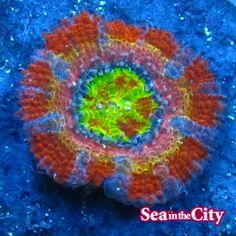 Coral, Symbols, Peace, Logos, City, Logo, Cities, Sobriety, Glyphs