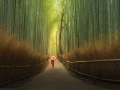 Arashiyama bamboo alley - Kyoto, Danielkordan.com workshop in Japan. 2016, November.