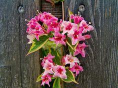 Rózsalonc | pixabay.com My Favorite Things, Plants, Planters, Plant, Planting